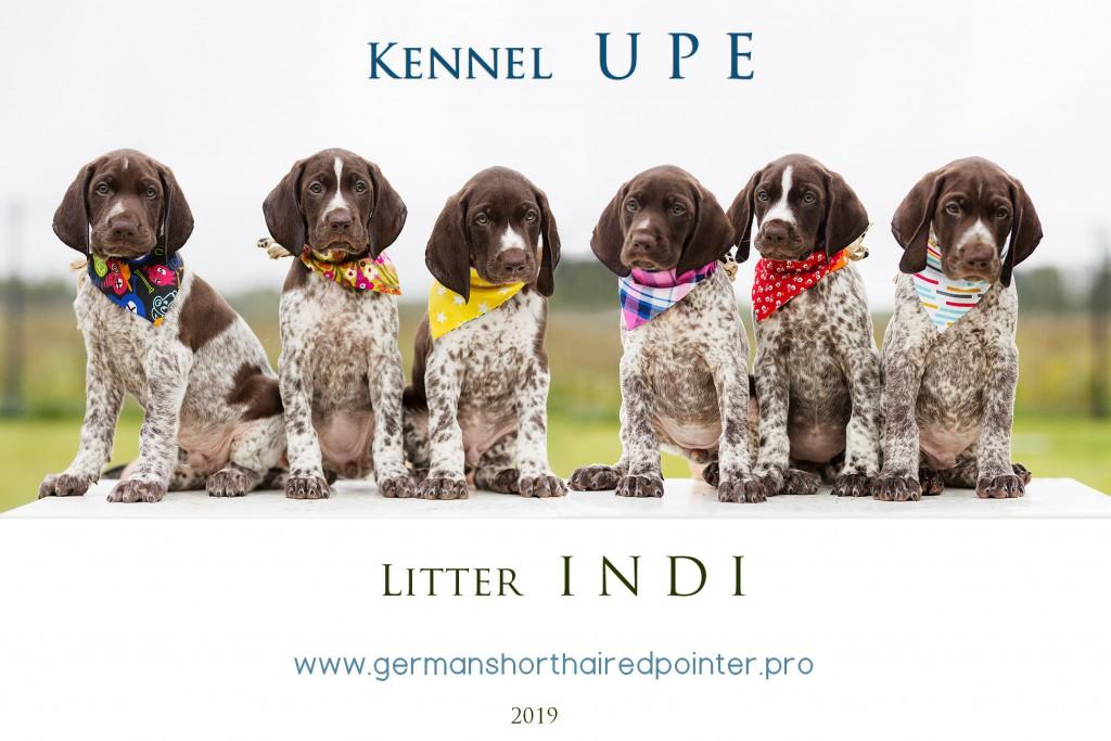 Litter_INDI